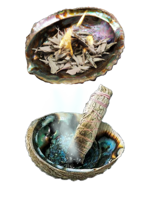 Coquille d'ormeau M - illustration