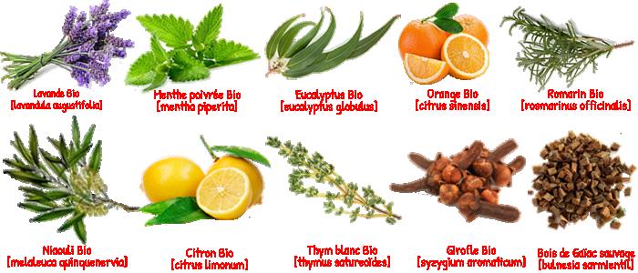 10 plantes médicinales Bio