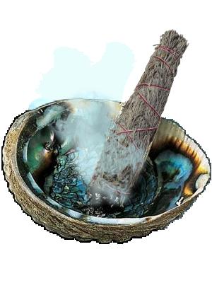 Sauge bleu en faisceau sur coquille d'ormeau